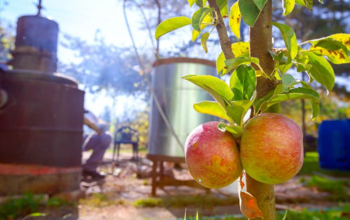 Ripe, mature red apple in front of domestic production, homemade distillery made of copper, making moonshine schnapps, alcoholic beverages such as brandy, rakija.